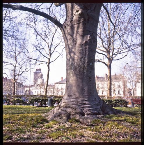 arbre058