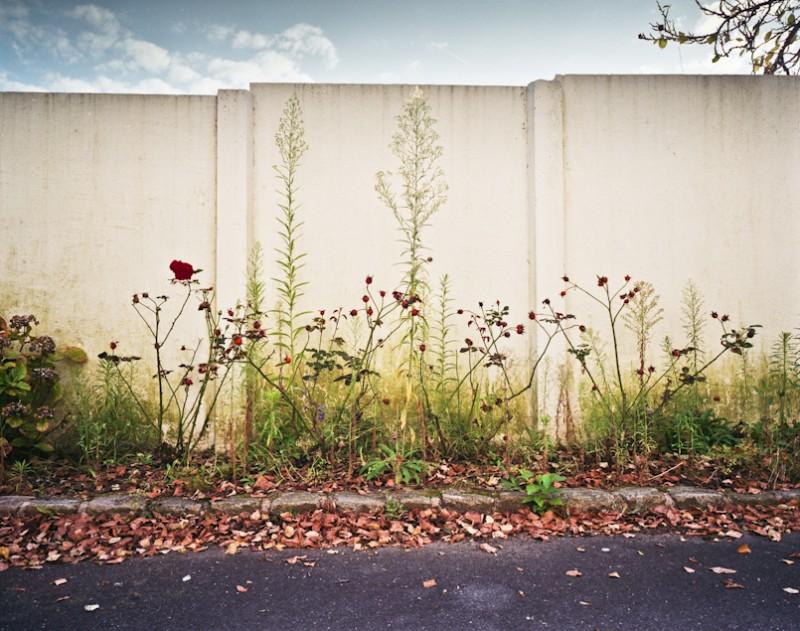 plante_07